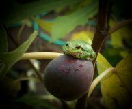 figsforlife.ca - frog pose spot (002)